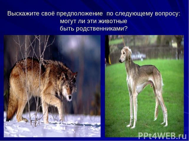 Выскажите своё предположение по следующему вопросу: могут ли эти животные быть родственниками?