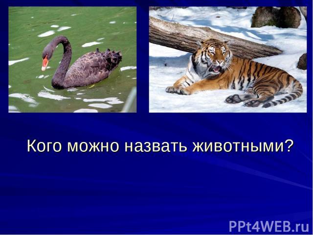 Кого можно назвать животными?