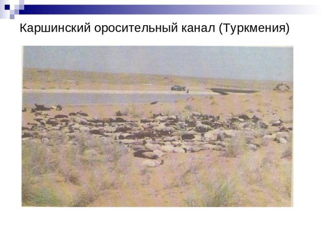 Каршинский оросительный канал (Туркмения)