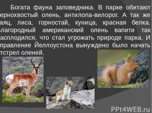 Богата фауна заповедника. В парке обитают чернохвостый олень, антилопа-вилорог.