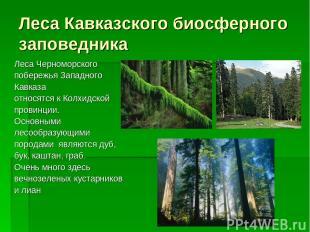 Леса Кавказского биосферного заповедника Леса Черноморского побережья Западного