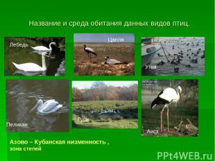 Название и среда обитания данных видов птиц. Лебедь Цапля Утки Пеликан Гуси Аист