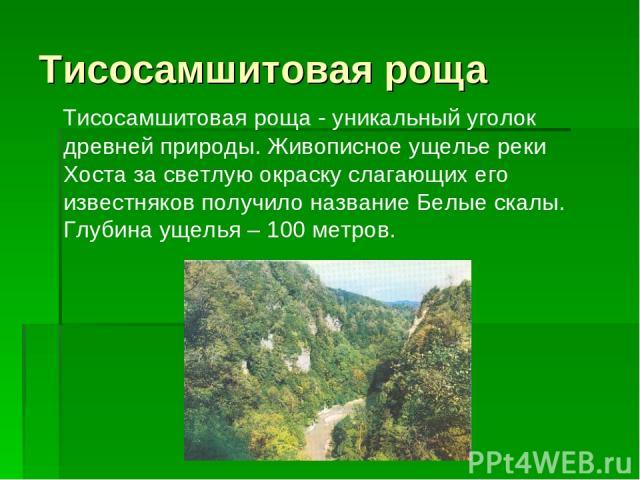 Тисосамшитовая роща Тисосамшитовая роща - уникальный уголок древней природы. Живописное ущелье реки Хоста за светлую окраску слагающих его известняков получило название Белые скалы. Глубина ущелья – 100 метров.