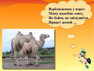 Верблюжонок уворот Маму жалобно зовет, Небойся, незаблудится, Придет домой…