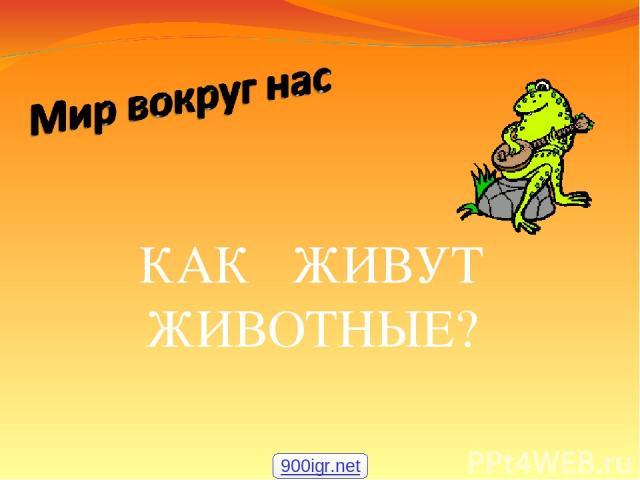 КАК ЖИВУТ ЖИВОТНЫЕ? 900igr.net