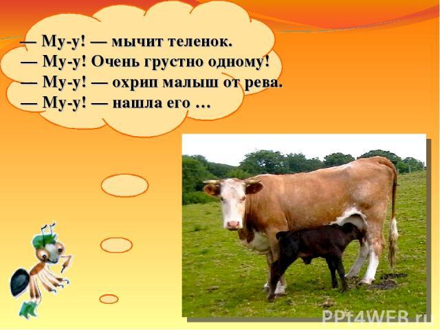 — Му-у!— мычит теленок. — Му-у! Очень грустно одному! — Му-у!— охрип малыш отрева. — Му-у!— нашла его…
