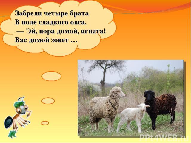 Забрели четыре брата Вполе сладкого овса. —Эй, пора домой, ягнята! Вас домой зовет…