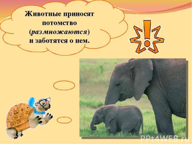 Животные приносят потомство (размножаются) изаботятся онем.