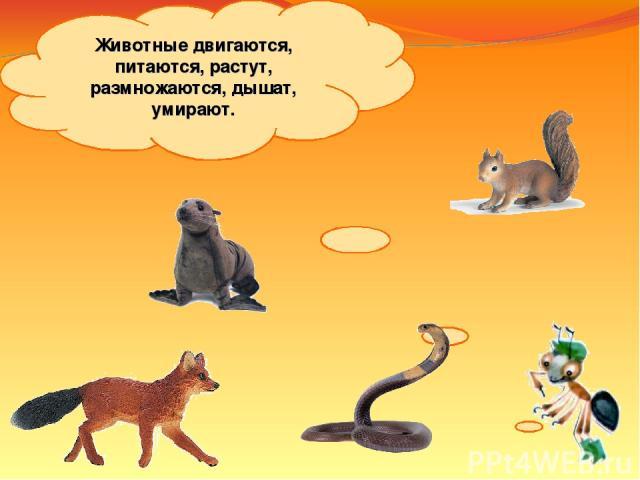 Животные двигаются, питаются, растут, размножаются, дышат, умирают.