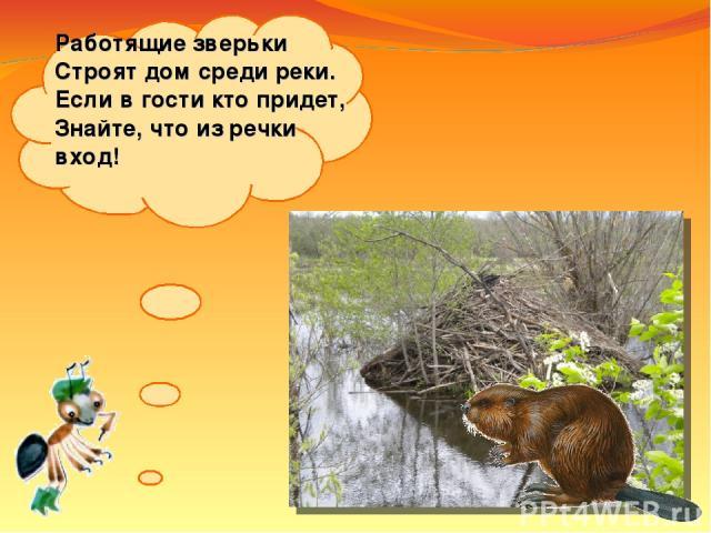 Работящие зверьки Строят дом среди реки. Если вгости кто придет, Знайте, что изречки вход!