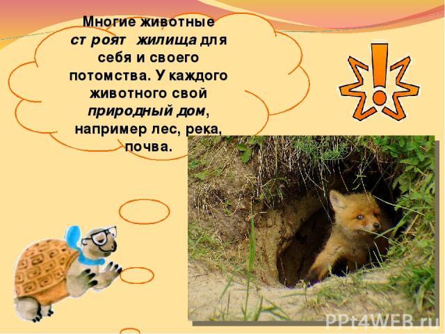 Многие животные строят жилища для себя исвоего потомства. Укаждого животного свой природный дом, например лес, река, почва.
