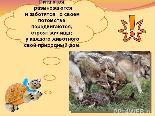 Питаются, размножаются изаботятся освоем потомстве, передвигаются, строят жилища; укаждого животного свой природный дом.