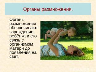 Органы размножения. Органы размножения обеспечивают зарождение ребёнка и его свя
