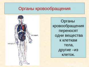 Органы кровообращения Органы кровообращения переносят одни вещества к клеткам те