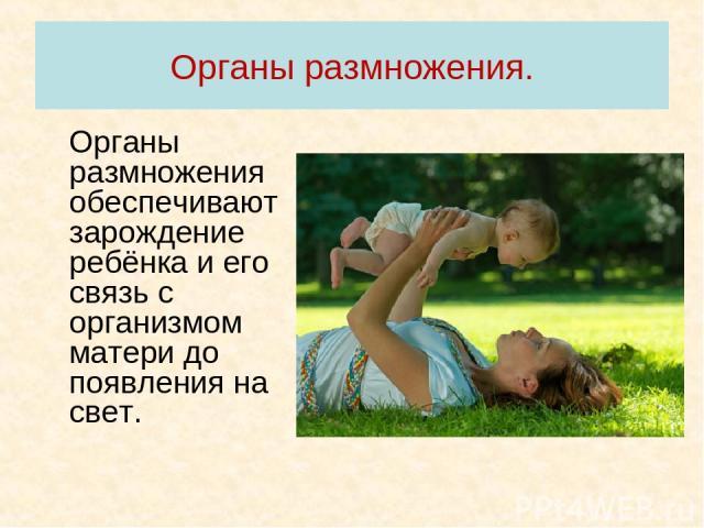 Органы размножения. Органы размножения обеспечивают зарождение ребёнка и его связь с организмом матери до появления на свет.