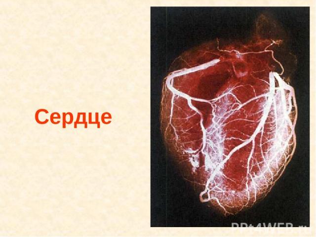 Сердце Сердце.