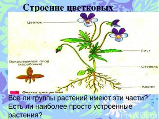 Строение цветковых растений. Все ли группы растений имеют эти части? Есть ли наи