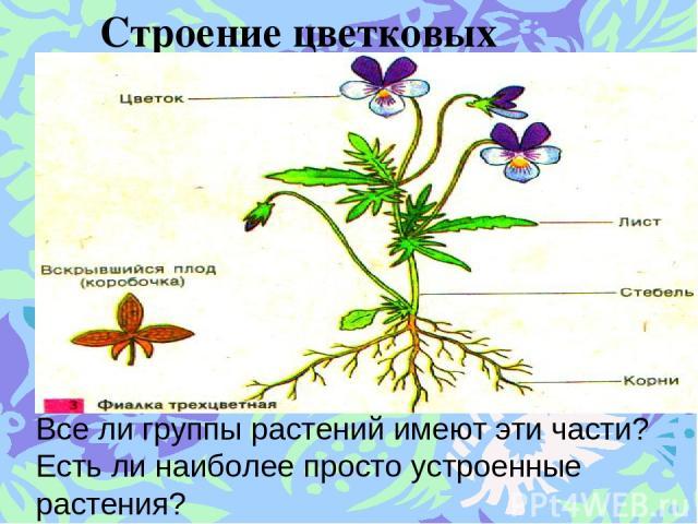 Строение цветковых растений. Все ли группы растений имеют эти части? Есть ли наиболее просто устроенные растения?