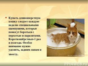 Купать длиношерстную кошку следует каждую неделю специальными шампунями, которые