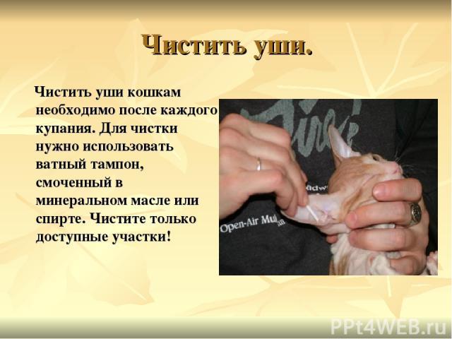 Чистить уши. Чистить уши кошкам необходимо после каждого купания. Для чистки нужно использовать ватный тампон, смоченный в минеральном масле или спирте. Чистите только доступные участки!