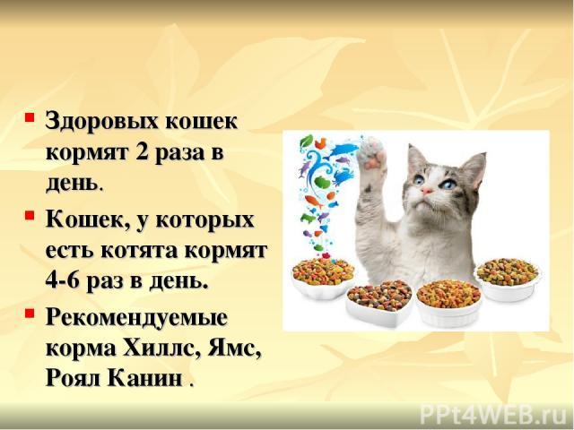 Здоровых кошек кормят 2 раза в день. Кошек, у которых есть котята кормят 4-6 раз в день. Рекомендуемые коpма Хиллс, Ямс, Роял Канин .