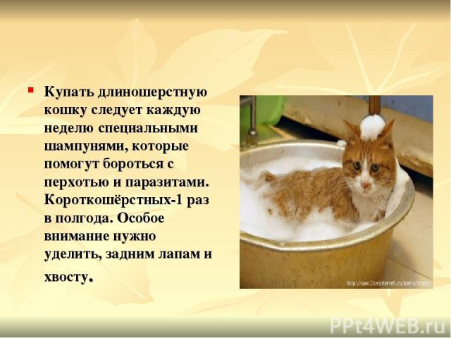 Купать длиношерстную кошку следует каждую неделю специальными шампунями, которые помогут бороться с перхотью и паразитами. Короткошёрстных-1 раз в полгода. Особое внимание нужно уделить, задним лапам и хвосту.