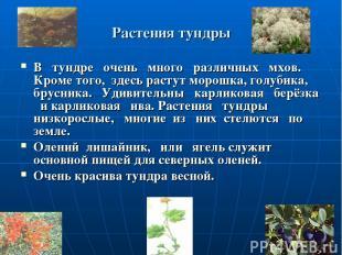 Растения тундры В тундре очень много различных мхов. Кроме того, здесь растут мо