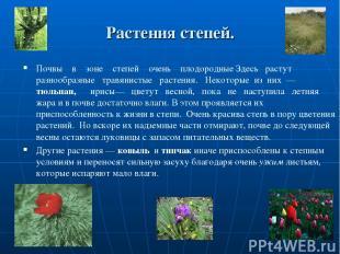 Растения степей. Почвы в зоне степей очень плодородные Здесь растут разнообразны