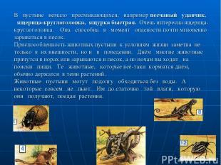 В пустыне немало пресмыкающихся, например песчаный удавчик, ящерица-круглоголовк