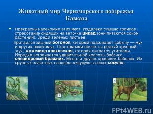 Животный мир Черноморского побережья Кавказа Прекрасны насекомые этих мест. Изда
