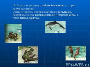 На берегу моря живут чайки, бакланы, которые кормятся рыбой. Очень интересны мор
