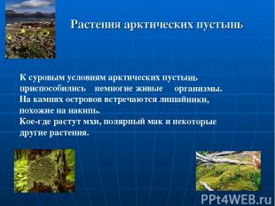 Растения арктических пустынь К суровым условиям арктических пустынь приспособили