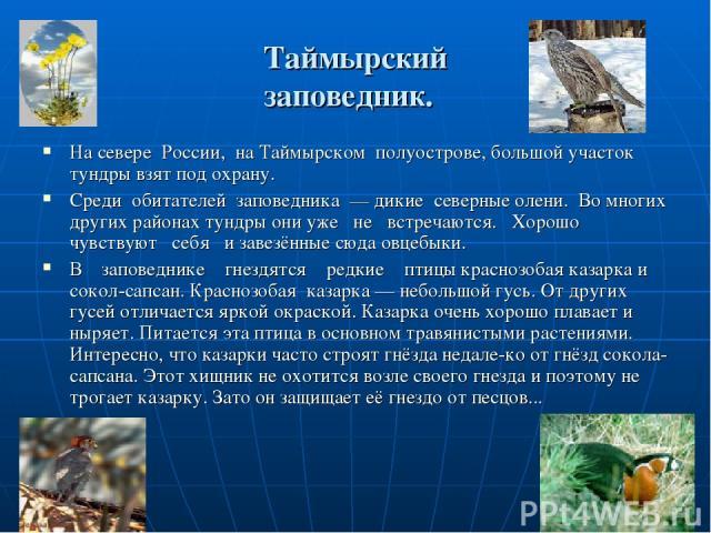 Таймырский заповедник. На севере России, на Таймырском полуострове, большой участок тундры взят под охрану. Среди обитателей заповедника — дикие северные олени. Во многих других районах тундры они уже не встречаются. Хорошо чувствуют себя и завезённ…