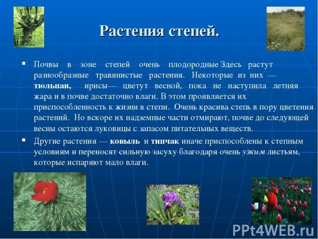 Растения степей. Почвы в зоне степей очень плодородные Здесь растут разнообразные травянистые растения. Некоторые из них — тюльпан, ирисы— цветут весной, пока не наступила летняя жара и в почве достаточно влаги. В этом проявляется их приспособленнос…