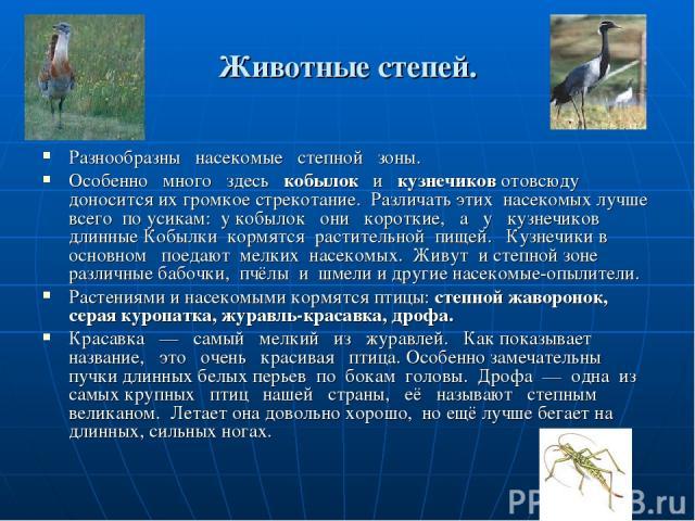 Животные степей. Разнообразны насекомые степной зоны. Особенно много здесь кобылок и кузнечиков отовсюду доносится их громкое стрекотание. Различать этих насекомых лучше всего по усикам: у кобылок они короткие, а у кузнечиков длинные Кобылки кормятс…