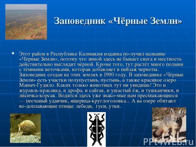 Заповедник «Чёрные Земли» Этот район в Республике Калмыкия издавна по лучил название «Чёрные Земли», потому что зимой здесь не бывает снега и местность действительно выглядит чёрной. Кроме того, тут растёт много полыни с тёмными веточками, которая д…