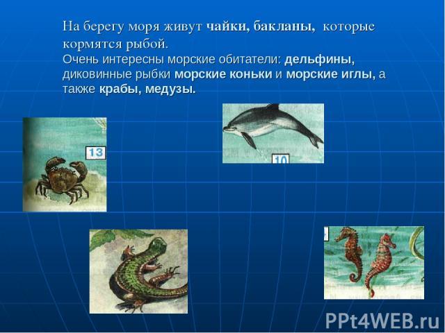 На берегу моря живут чайки, бакланы, которые кормятся рыбой. Очень интересны морские обитатели: дельфины, диковинные рыбки морские коньки и морские иглы, а также крабы, медузы.