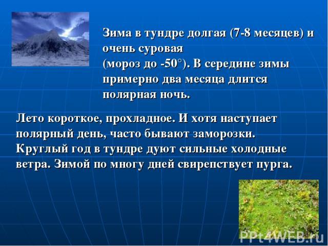 Лето короткое, прохладное. И хотя наступает полярный день, часто бывают заморозки. Круглый год в тундре дуют сильные холодные ветра. Зимой по многу дней свирепствует пурга. Зима в тундре долгая (7-8 месяцев) и очень суровая (мороз до -50°). В середи…
