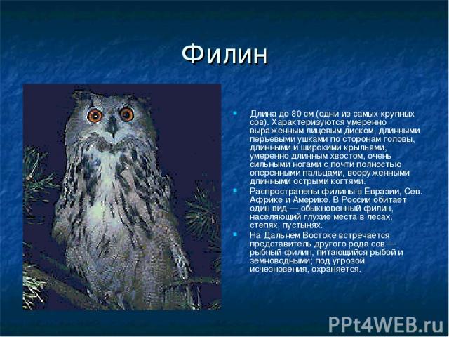 Филин Длина до 80 см (одни из самых крупных сов). Характеризуются умеренно выраженным лицевым диском, длинными перьевыми ушками по сторонам головы, длинными и широкими крыльями, умеренно длинным хвостом, очень сильными ногами с почти полностью опере…