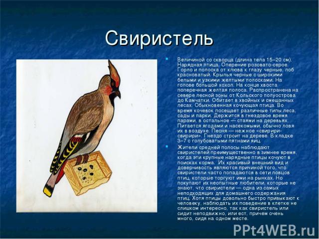 Свиристель Величиной со скворца (длина тела 15–20 см). Нарядная птица. Оперение розовато-серое. Горло и полоска от клюва к глазу черные, лоб красноватый. Крылья черные с широкими белыми и узкими желтыми полосками. На голове большой хохол. На конце х…