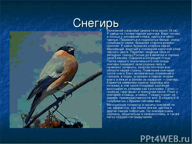 Снегирь Величиной с воробья (длина тела около 18 см). У самца на голове черная шапочка. Верх головы и кольцо у основания клюва, крылья и хвост черные. Подхвостье и надхвостье белые, спина голубовато-серая, брюшная сторона розово-красная. У самок брю…