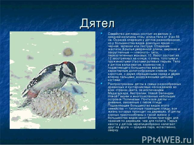 Дятел Семейство дятловых состоит из мелких и средней величины птиц: длина тела от 9 до 56 см. Окраска оперения у дятлов разнообразная, но у большинства видов довольно яркая — черная, зеленая или пестрая. Оперение жесткое. Крылья умеренной длины, шир…