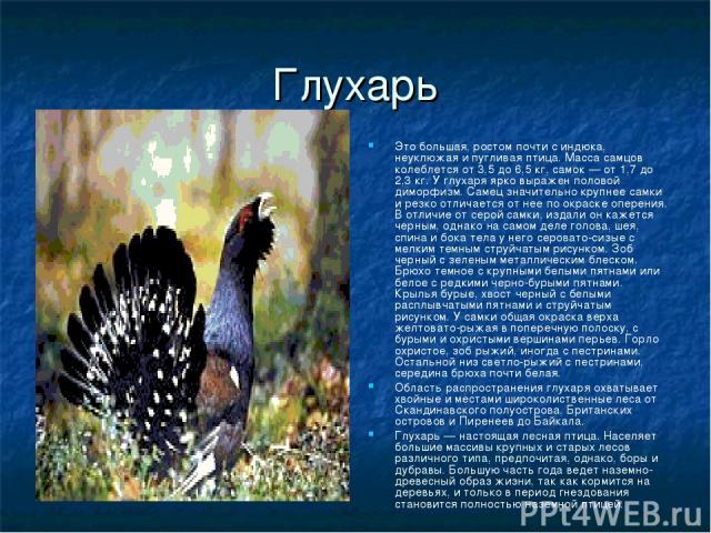Глухарь Это большая, ростом почти с индюка, неуклюжая и пугливая птица. Масса самцов колеблется от 3,5 до 6,5 кг, самок — от 1,7 до 2,3 кг. У глухаря ярко выражен половой диморфизм. Самец значительно крупнее самки и резко отличается от нее по окраск…