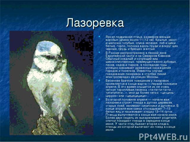 Лазоревка Яркая подвижная птица, размером меньше воробья (длина около 11–12 см). Крылья, хвост и шапочка голубые, спина зеленая, лоб и щеки белые, горло, полоска вдоль груди и вокруг щек черные, грудь и брюшко желтые. В России распространена в лесно…