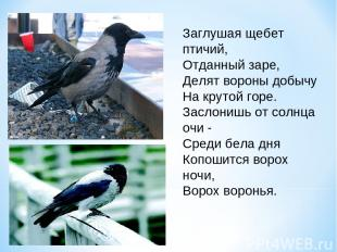 Заглушая щебет птичий, Отданный заре, Делят вороны добычу На крутой горе. Заслон