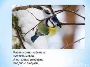 Разве можно забывать: Улететь могли, А остались зимовать Заодно с людьми.