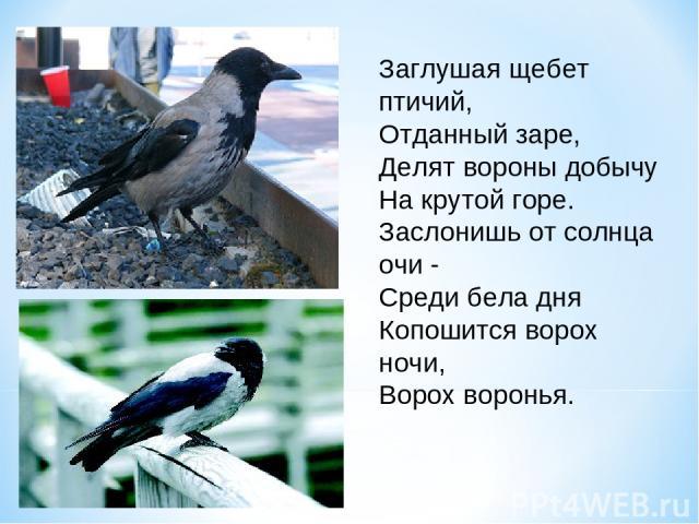 Заглушая щебет птичий, Отданный заре, Делят вороны добычу На крутой горе. Заслонишь от солнца очи - Среди бела дня Копошится ворох ночи, Ворох воронья.