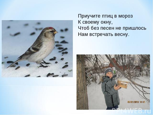 Приучите птиц в мороз К своему окну, Чтоб без песен не пришлось Нам встречать весну.