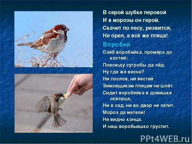 В серой шубке перовой И в морозы он герой. Скачет по лесу, резвится, Не орел, а всё же птица! Воробей Озяб воробейка, промёрз до костей: Повсюду сугробы да лёд. Ну где же весна? Ни послов, ни вестей Зимовщикам птицам не шлёт. Сидит воробейка в домиш…