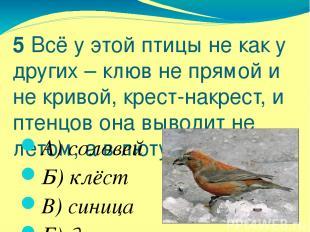 5 Всё у этой птицы не как у других – клюв не прямой и не кривой, крест-накрест,